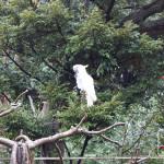 zoo ueno