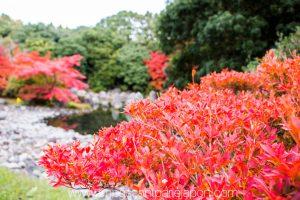 exposition-universelle-osaka-jardin-japonais-4