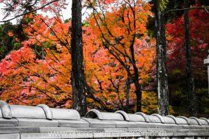exposition-universelle-osaka-jardins-naturels-5
