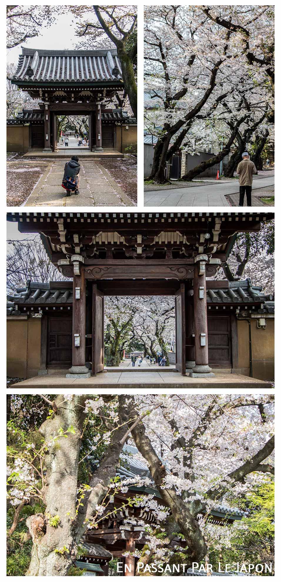 Homyoji-intérieur-cerisiers