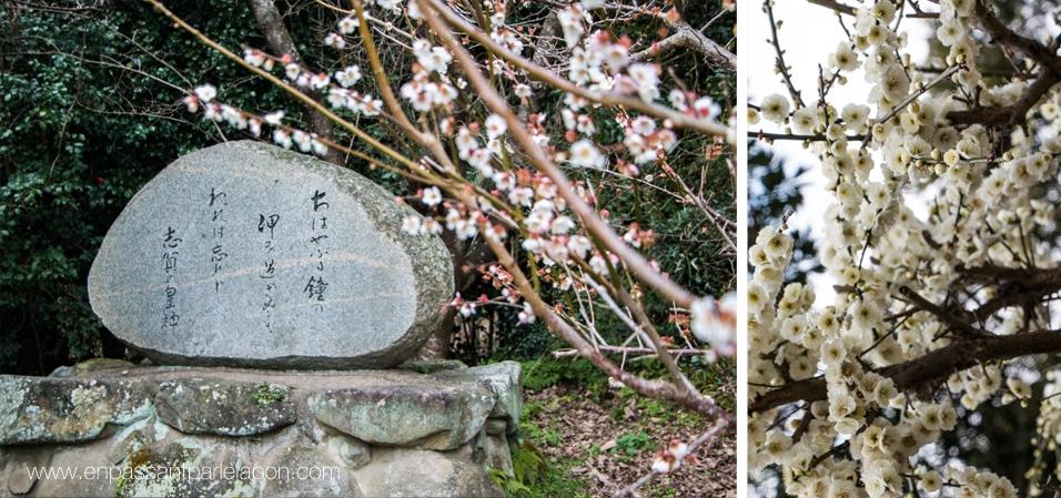 shikanoshima-sakura
