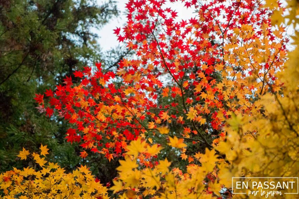 automne Otsu