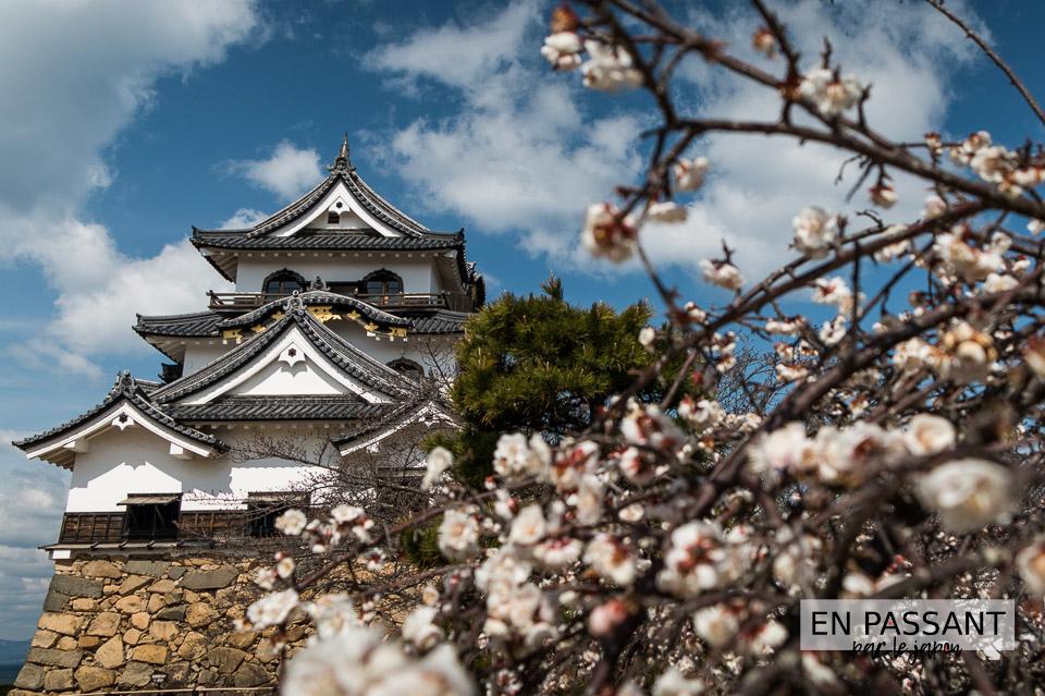 Chateau Hikone sakura
