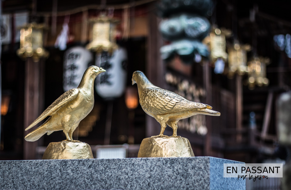pigeons Himure Hachimangu