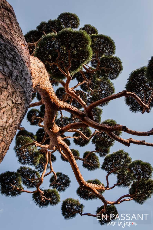 gokoku-ji arbre
