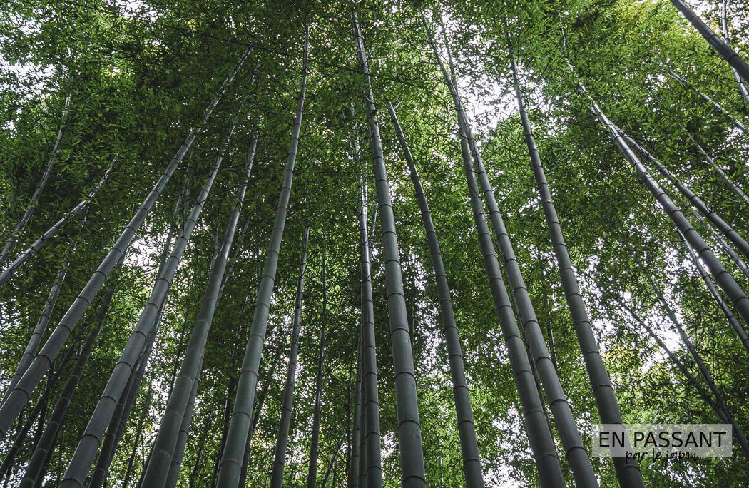 bambouseraie kamakura